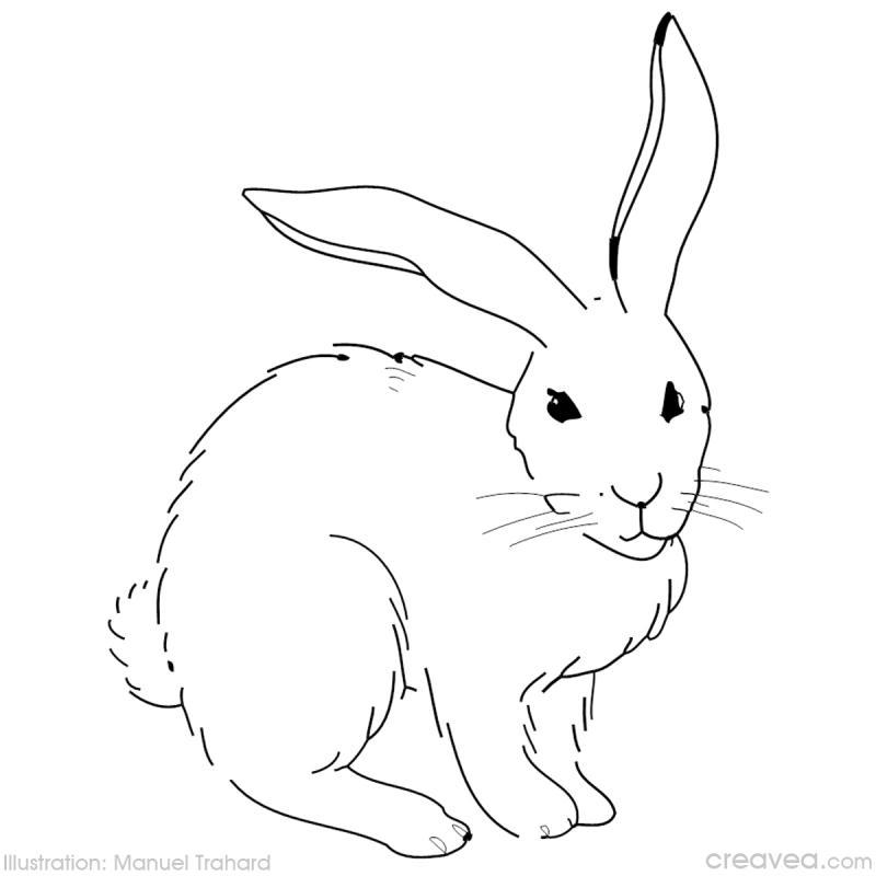 Coloriage p ques id es conseils et tuto coloriage - Dessin de lapin facile ...