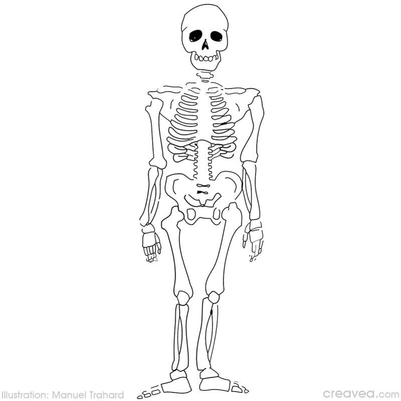 Squelette Dessin Halloween.Coloriage Halloween Idées Conseils Et Tuto Coloriage
