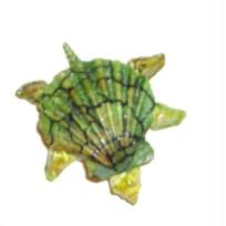 Tortue en coquillages