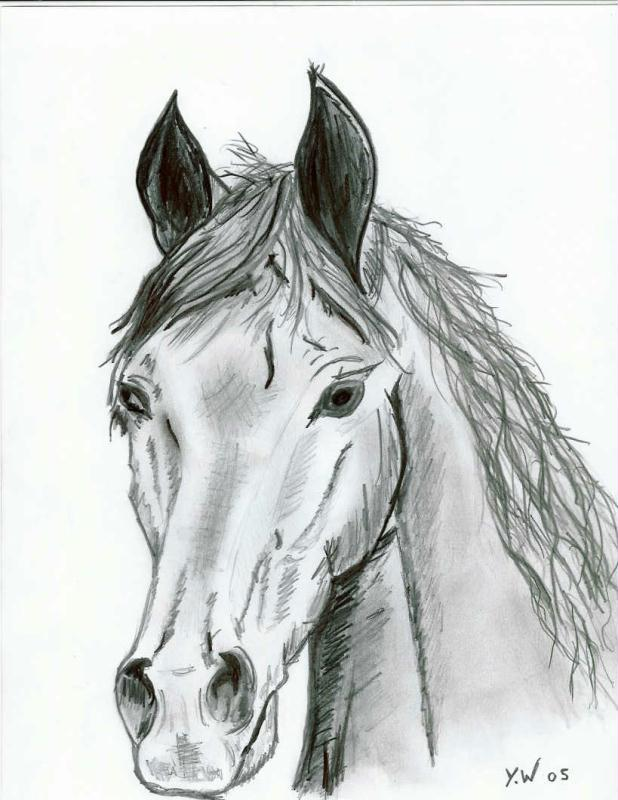 Dessin animaux cheval au crayon cr ations beaux arts - Main dessin crayon ...