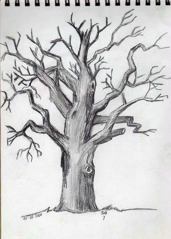 arbre mort r alis un beau jour d 39 hiver au crayon papier cr ations beaux arts dessin de. Black Bedroom Furniture Sets. Home Design Ideas