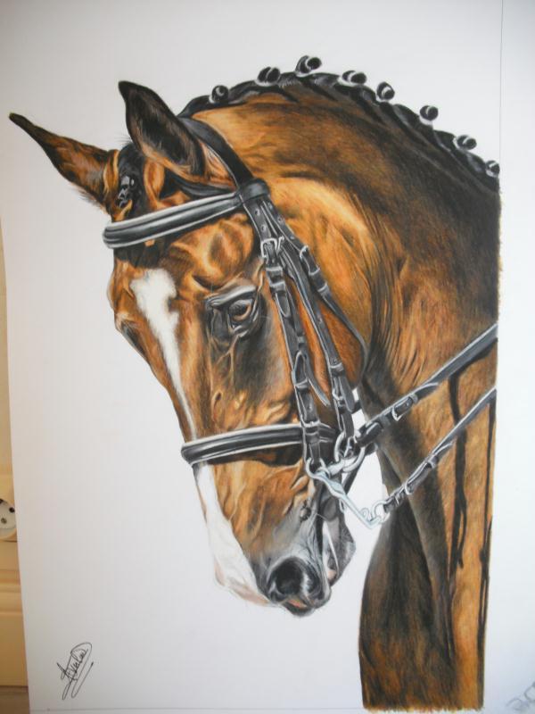 Cr ation peinture cheval cheval de dressage en bride for Peinture sur fer a cheval